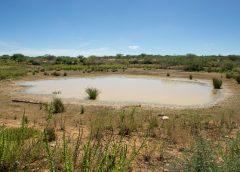 Combate à desertificação na caatinga depende de pesquisa científica e ação de pequenos produtores