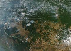 Desmatamento na Amazônia é 'perda irreparável', diz especialista em recuperação ambiental
