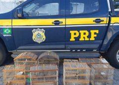 Aves silvestres mantidas em cativeiro são resgatadas em Feira de Santana