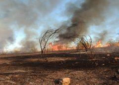 Incêndio causa destruição da mata e morte de animais na região de Sobral e Groaíras