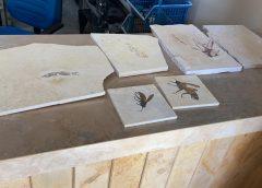 PF faz desarticula quadrilha que traficava fósseis no Cariri