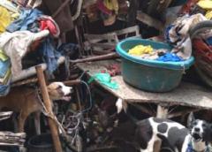 Sete cachorros mau-tratados são resgatados em Juazeiro do Norte